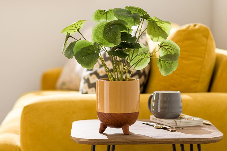 An indoor plant in a wooden and yellow ceramic tripod planter beside a yellow sofa.