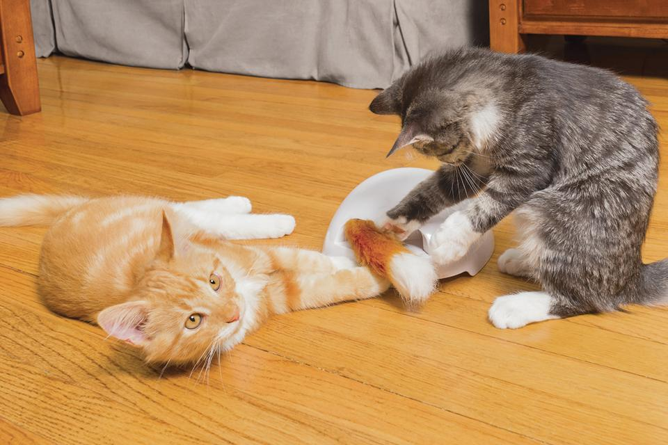 Ginger and tabby cats playing with Fox Den toy.