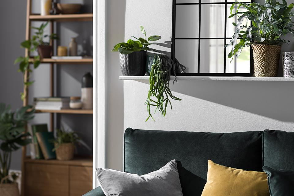 A green velvet sofa beneath a floating shelf containing indoor plants and a window mirror.
