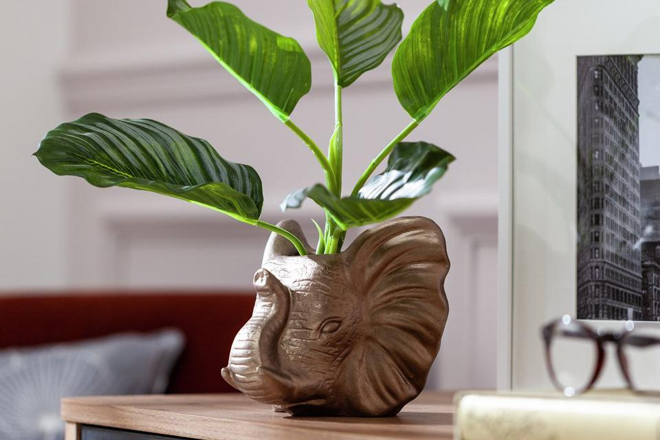 Bronze elephant head plant pot with plant.