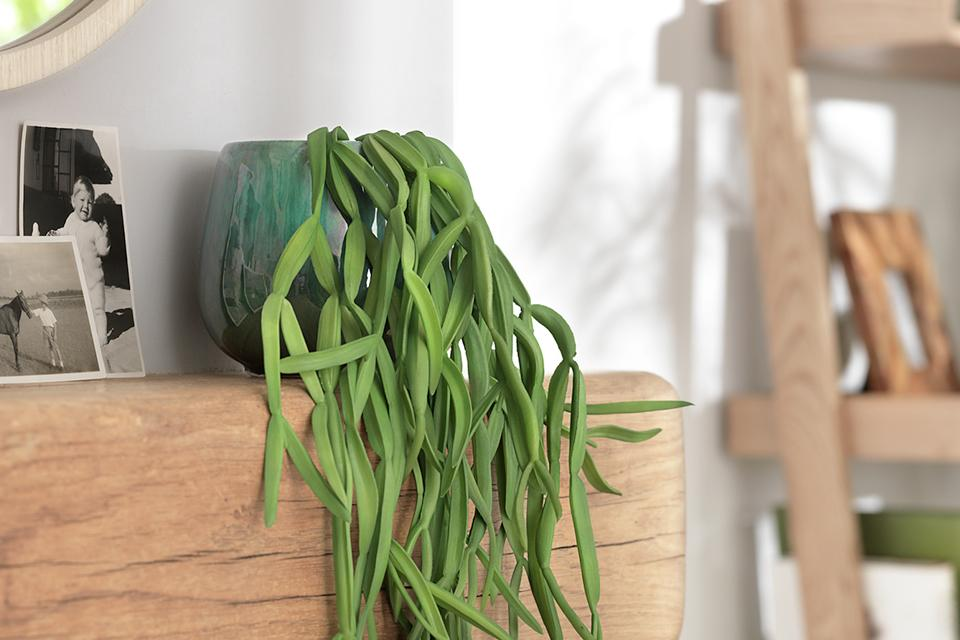 A trailing plant in a green reactive glaze pot on a wooden shelf.