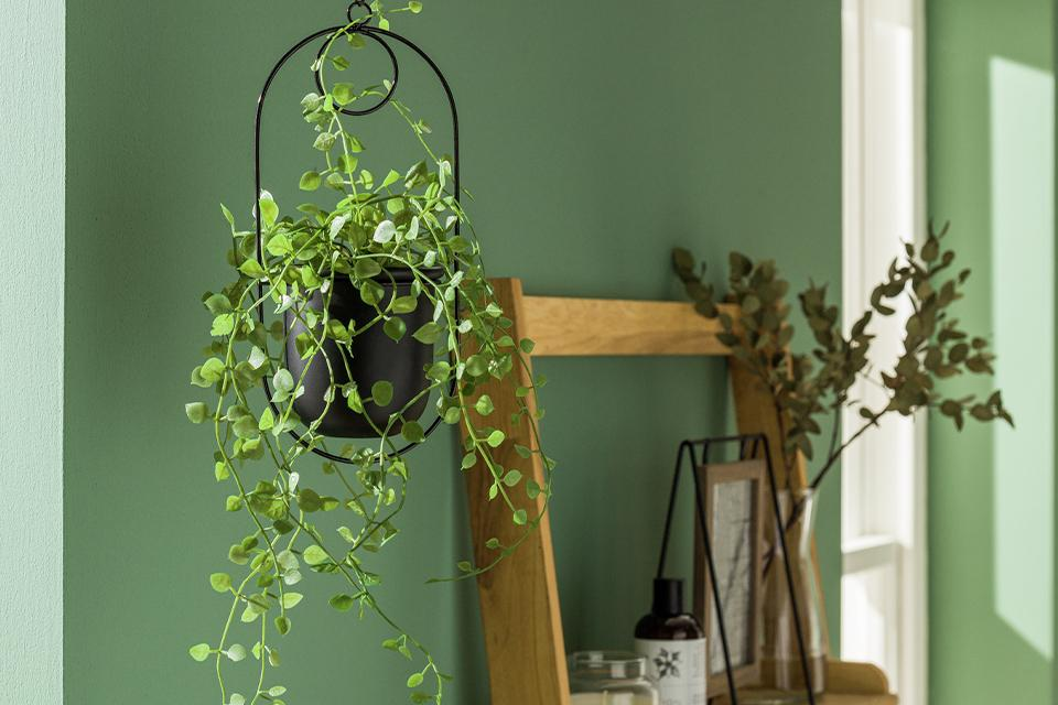A trailing plant in a black hanging planter beside a wooden ladder shelf.