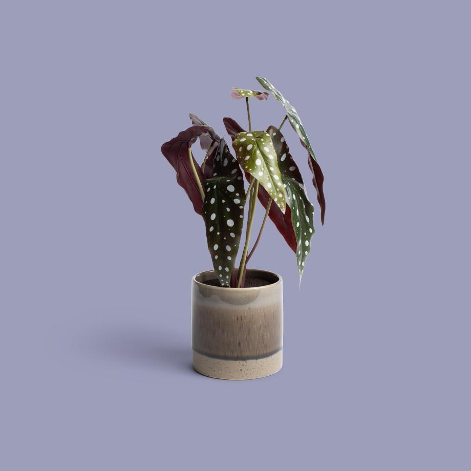 A leafy, spotted artificial plant in a reactive glaze pot.