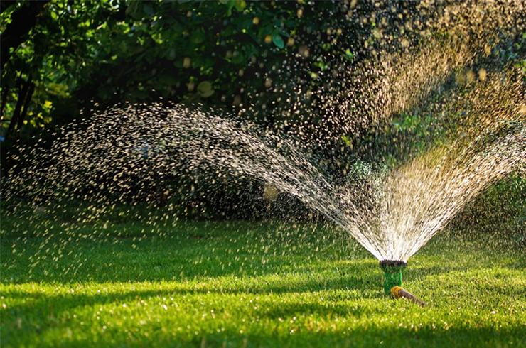How to save water in your garden.