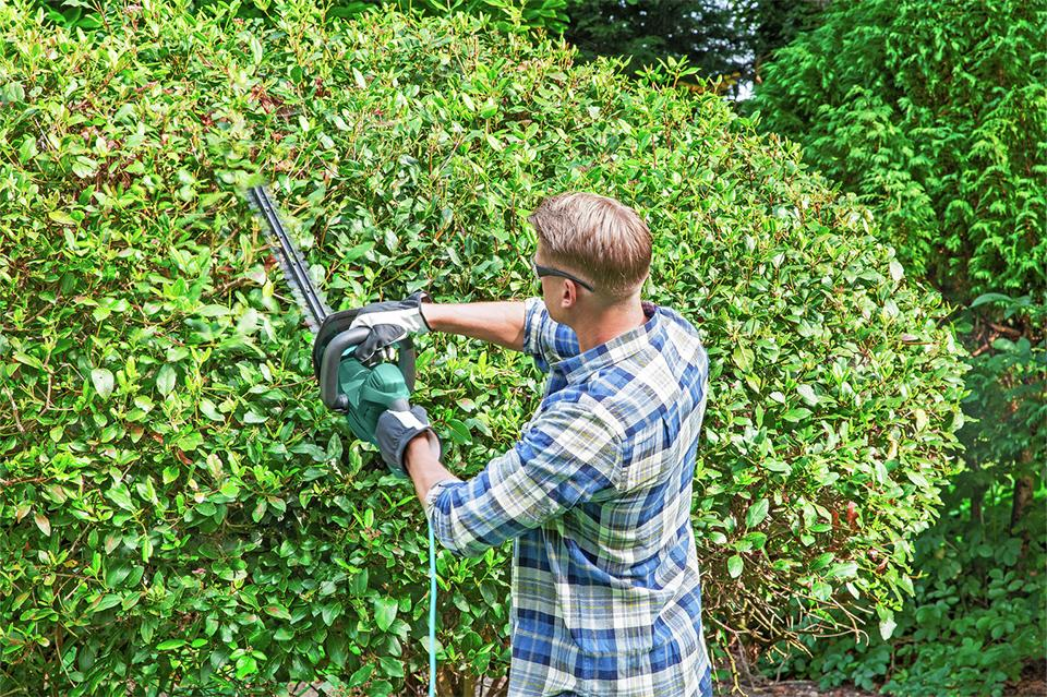 Man using a McGregor hedge trimmer to neaten up a hedge.