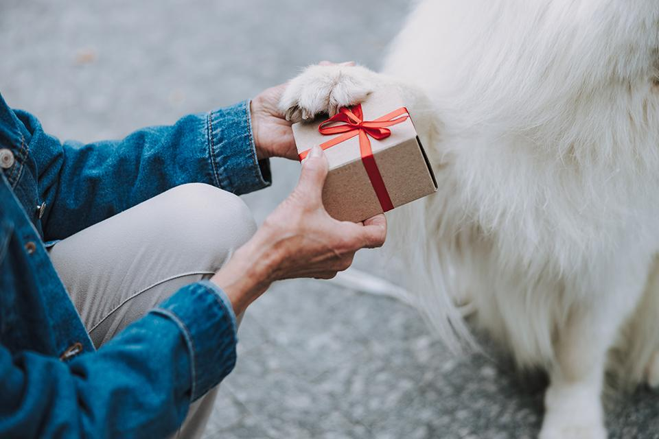 Image of a dog getting a giftbox