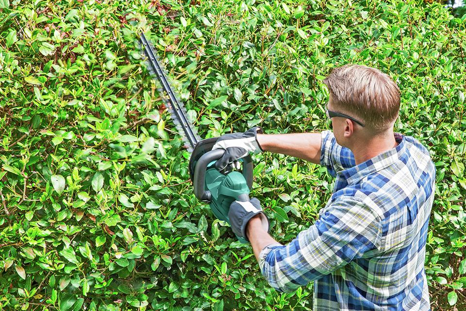 Man using hedge trimmer to neaten hedge.
