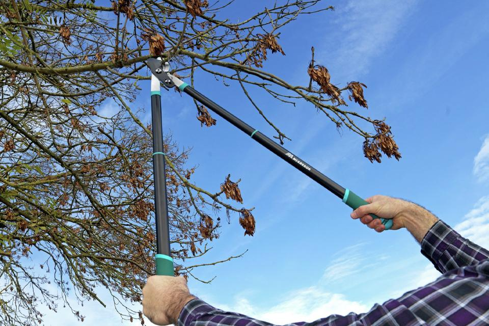: Man using long handled loppers to cut tree branch.