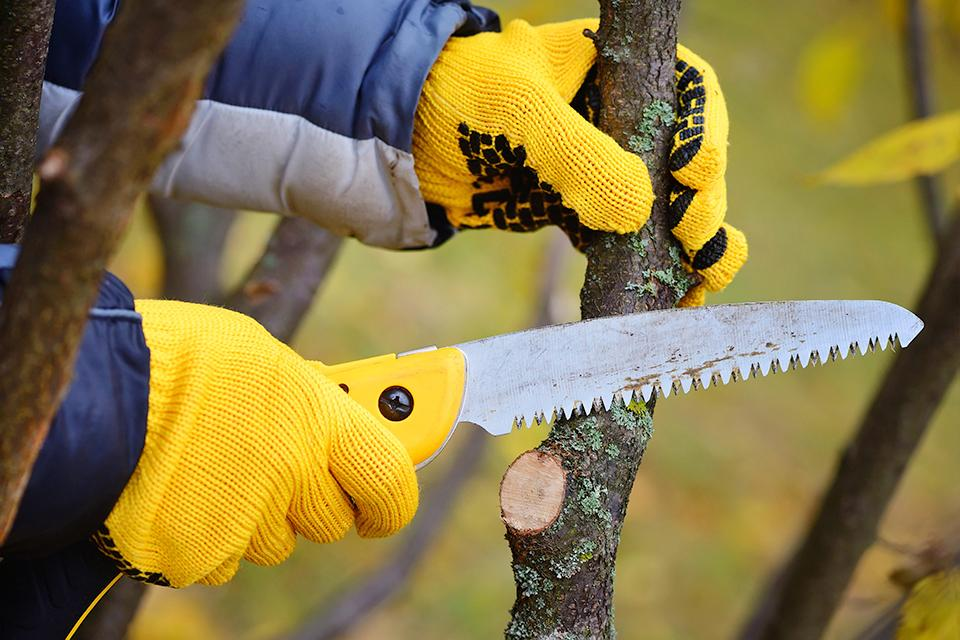 :  Man wearing gloves and using hand saw to trim branch.