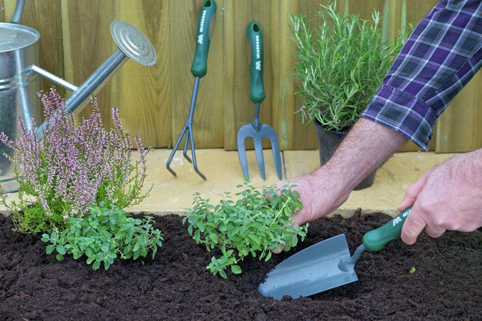 Man planting small plants using a trowel, with a hand tools and a watering can in the background.