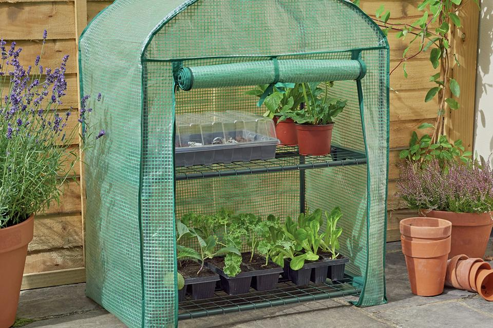 'Grow your own' with a mini greenhouse.