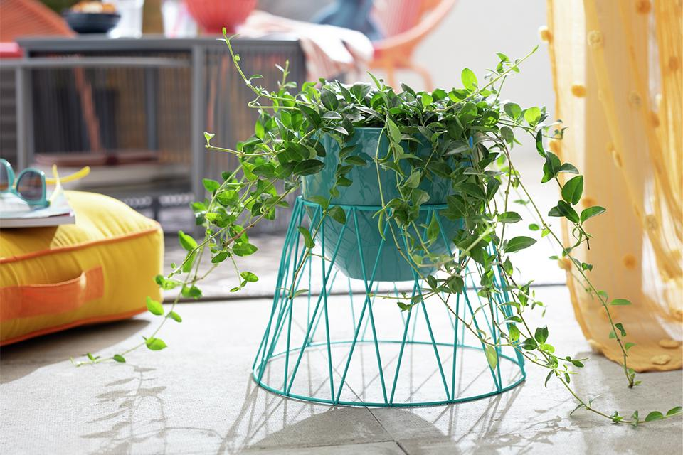 Turquoise metal plant pot with pant.