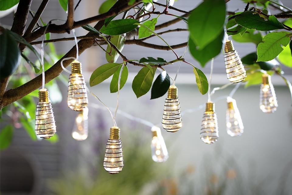 Solar lights hanging from tree.