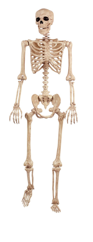 Argos Home Large Hanging Skeleton
