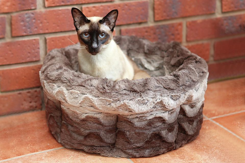 A Siamese cat sat in a small cat bed indoors.