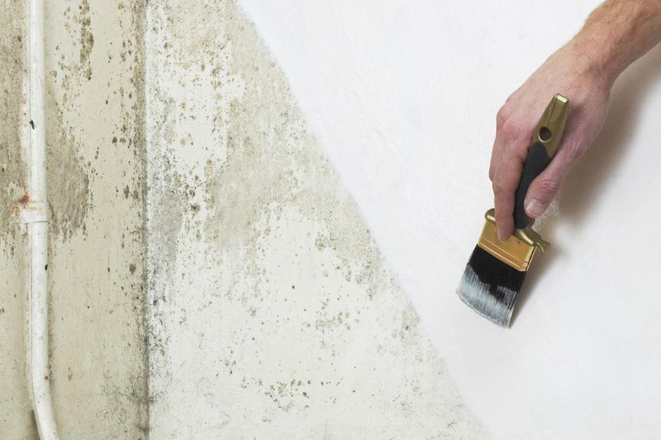 Person painting white damp paint onto a wall.