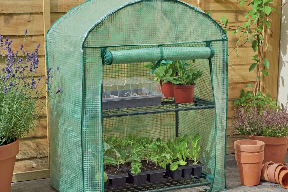 Mini greenhouse with the front opening rolled up and plants on the two shelves.
