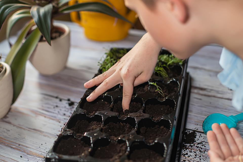 Boy planting seeds in a seed tray.