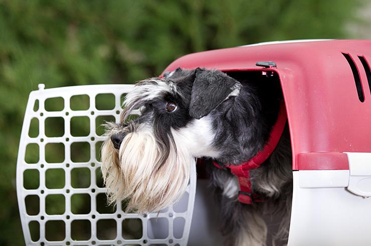Pet carriers and crates.