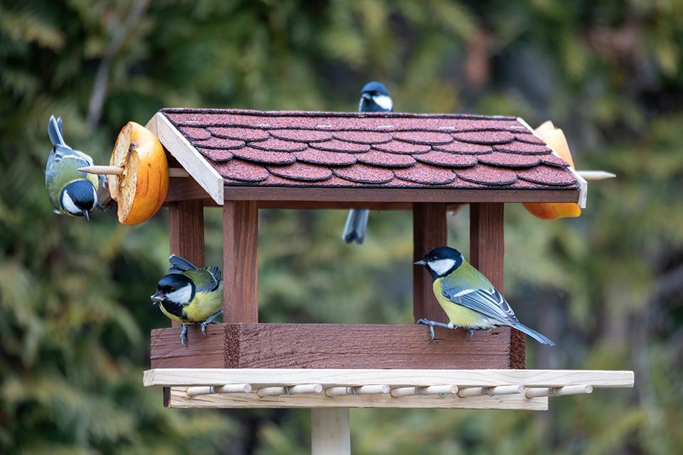 Small birds eating fruit from a wooden garden table.