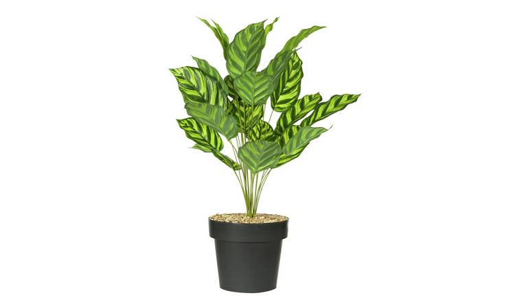 Argos Home Faux Calathea In A Pot