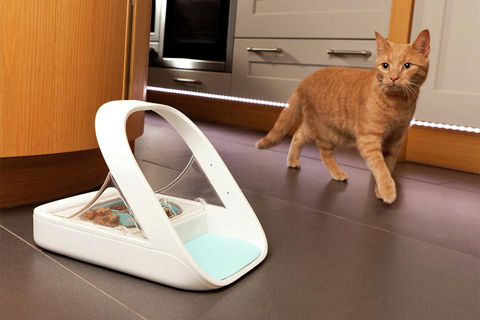Ginger cat walking up to microchip controlled cat feeder.
