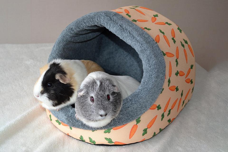 Two guinea pigs in a bed.