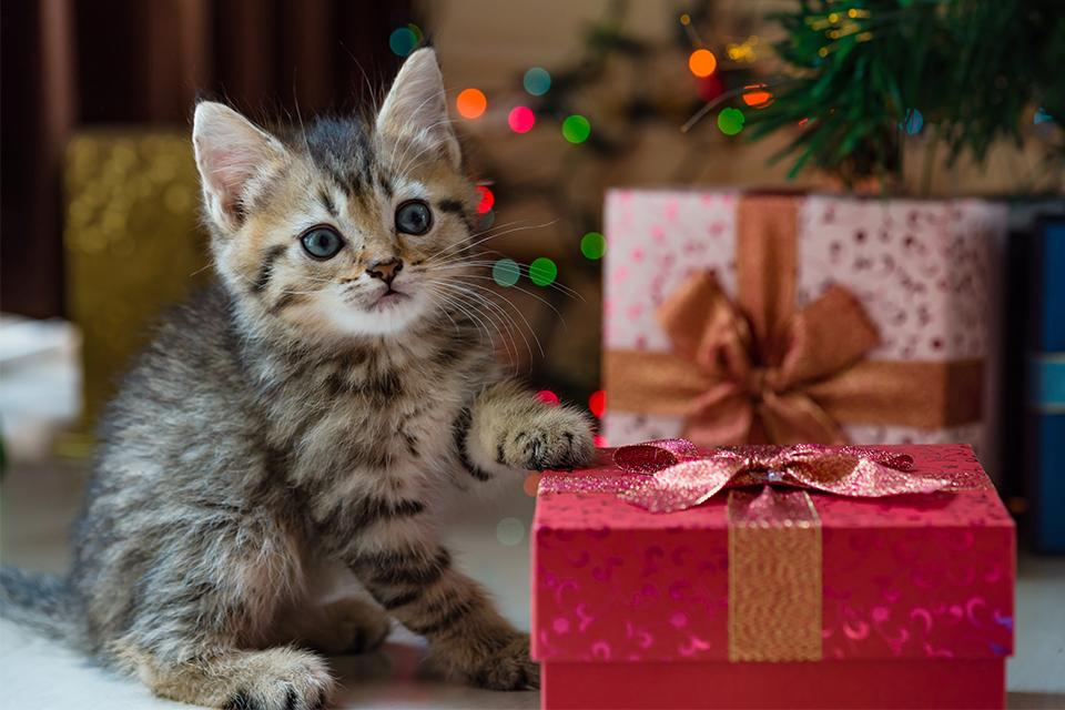 Kitten with paw on red present.