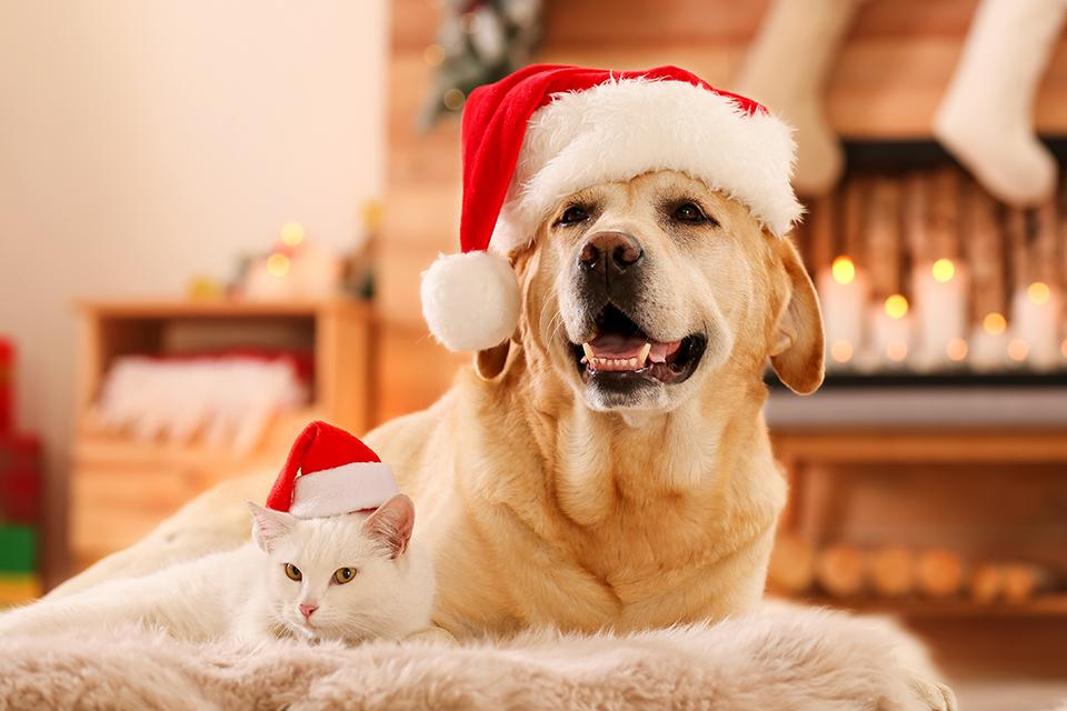 Presents for pets.