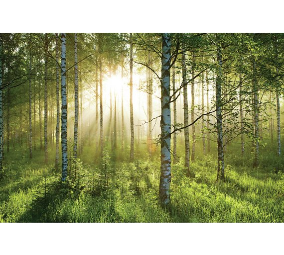 1Wall Forest Wall Mural