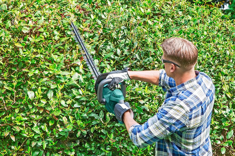 Man using hedge trimmer on garden hedge.