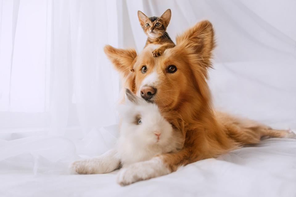 A long haired dog sat on white sheets with paws out in front. A small kitten is sat on the dogs head, with a fluffy rabbit sat between its front legs.
