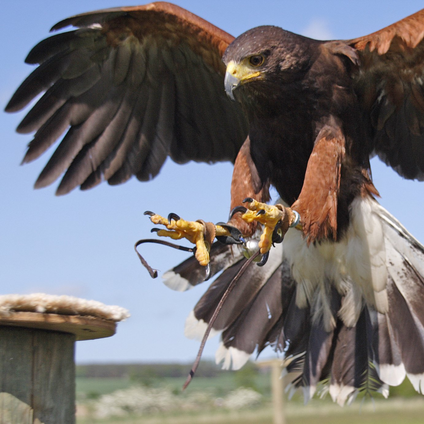 Activity Superstore Falconry and Birds of Prey Experience
