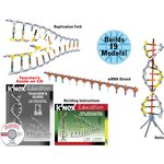 more details on K'NEX DNA, Replication and Transcription Set.
