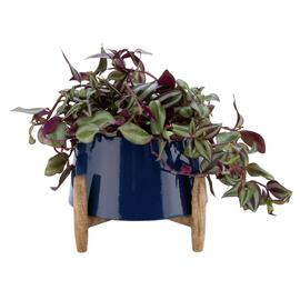 Argos Home Coastline Standing Planter