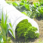 more details on Gardman Polythene Grow Tunnel.