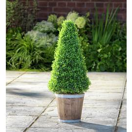 Argos Home Faux Cone Tree Wooden Pot