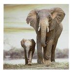 more details on Collection Elephants Framed Print.