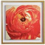 more details on Collection Ranuncular Rose Print Framed Canvas.