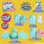 more details on Little Live Pets Surprise Chick.