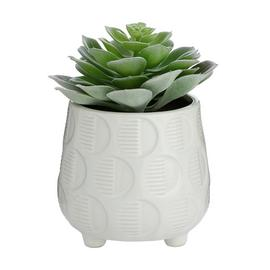 Sainsbury's Home Succulent in Ceramic Pot