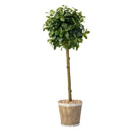 Argos Home Artificial Rounded Bay Tree In A Wooden Pot