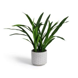 Argos Home Large House Plant