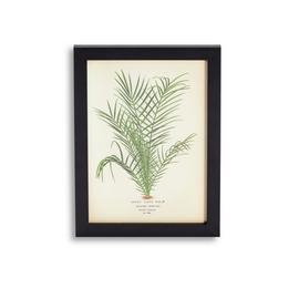 Habitat Eden Leaf Print Framed Wall Art