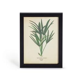 Habitat Eden Fern Leaf Print Framed Wall Art