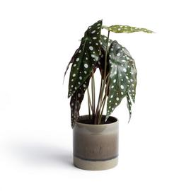 Habitat Eden Large Spotted Artificial Plant