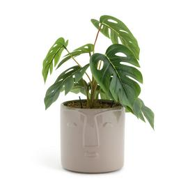 Habitat Boho Large Faux Face Plant - Cream