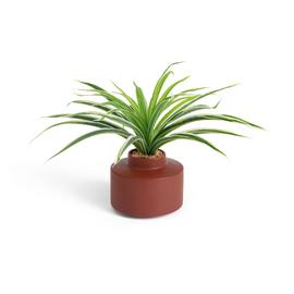 Habitat Artificial Spider Plant