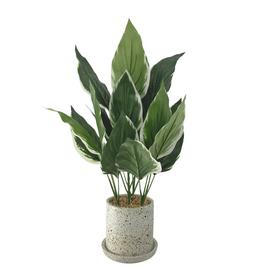 Habitat Artificial Plant on Terrazzo Pot with Tray